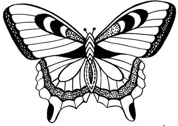 Трафарет бабочки своими руками фото фото 325