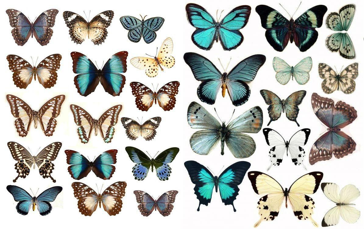 Своими руками трафарет бабочек