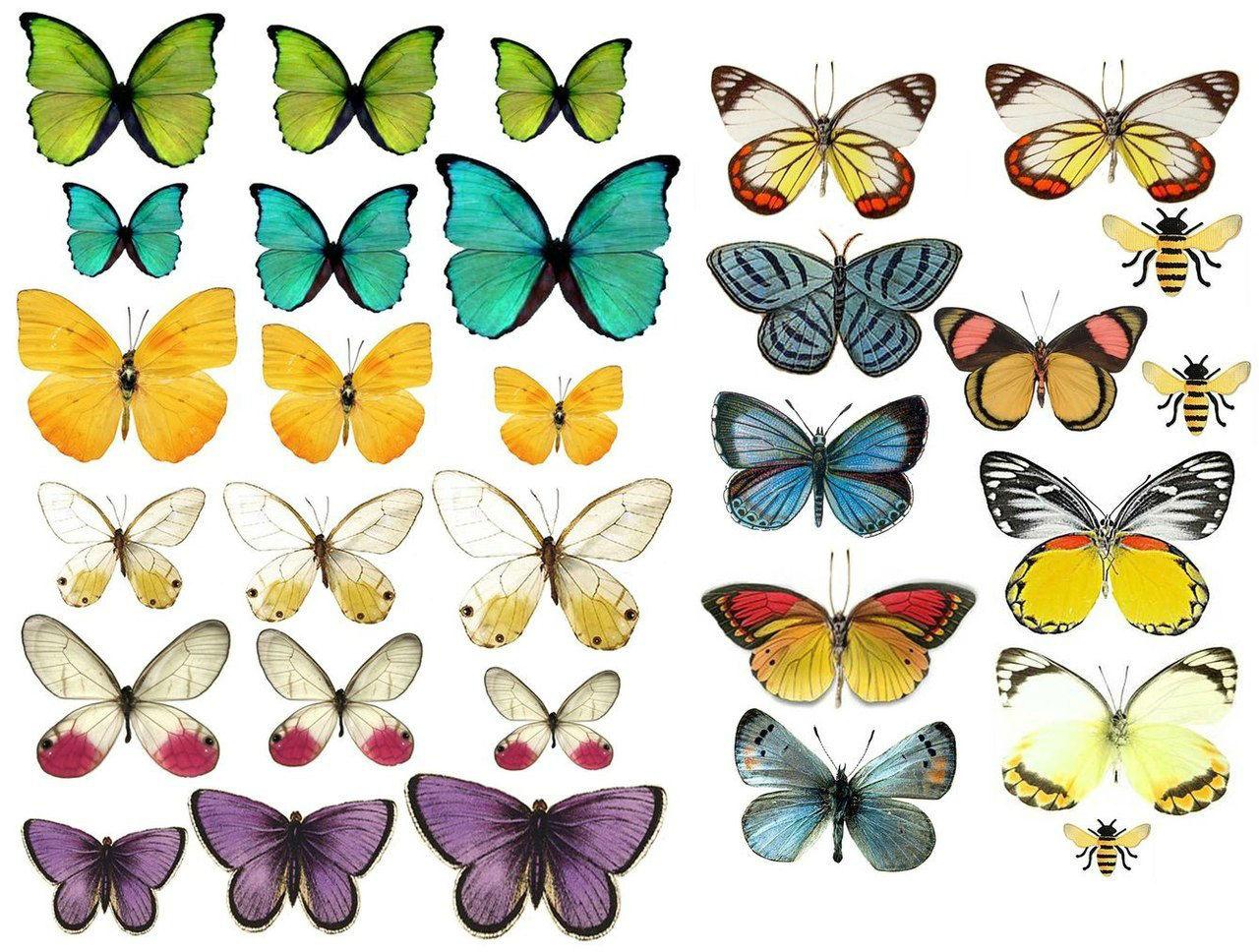 Бабочки для декора своими руками: из бумаги, объемные 44