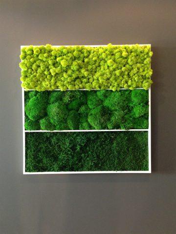 Стабилизационный мох в дизайне на стене