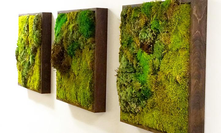 Как сделать зеленую стену из мха своими руками