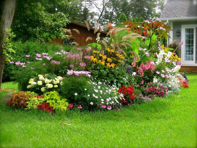 куст цветов