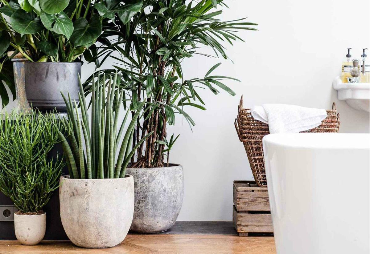 дом растения комнатные картинки этом